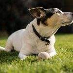 Most Beautiful Dog Breed , Terrier, England