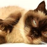 Most Popular and Cool Cat Names (1)
