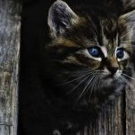 Most Popular and Cool Cat Names (3)
