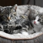 Most Popular and Cool Cat Names (5)