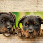 Top 10 Most Beautiful Dog Breeds in the World