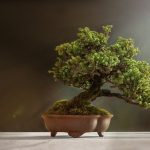 How to Save a Dying Tree (2)
